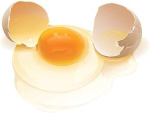 eggs-realistic_vector_eggs_154680